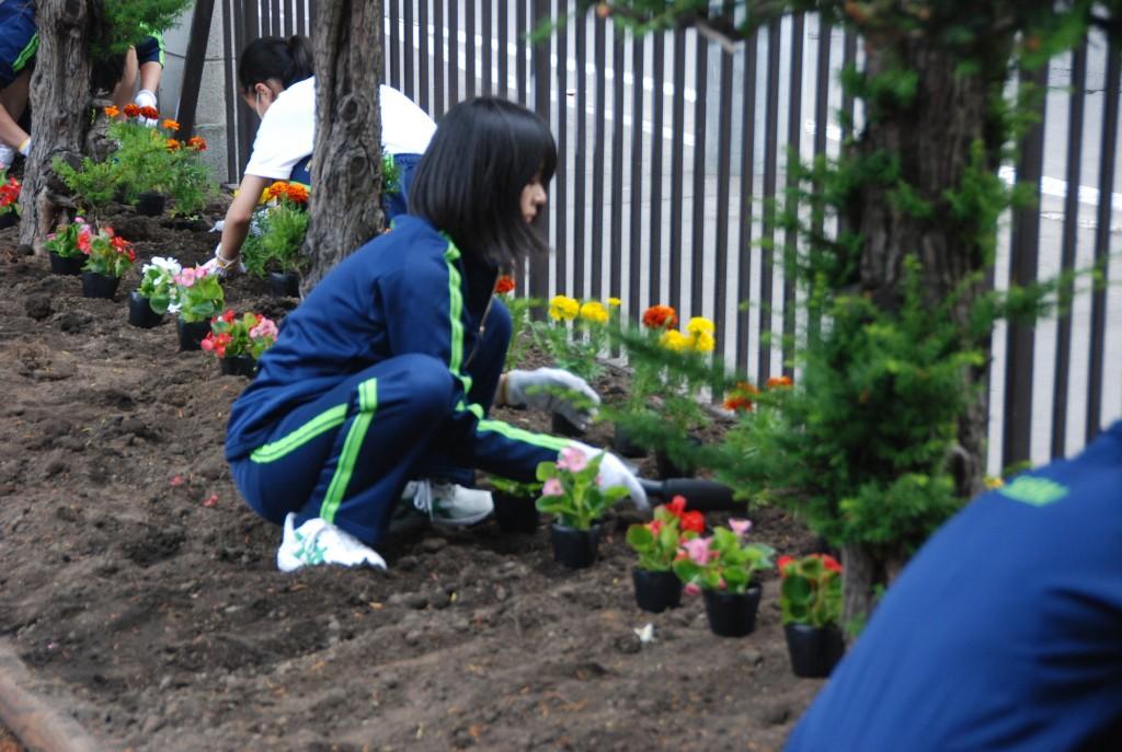 分担して草むしりから始め、花壇には数種類の花を植えました。